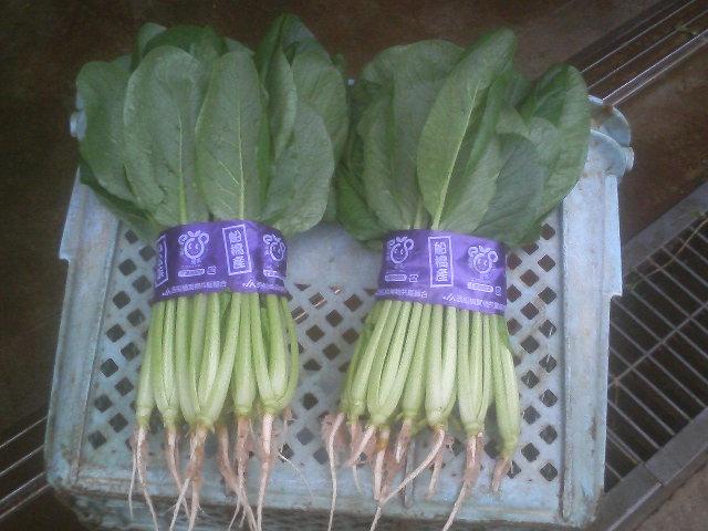 小松菜品種情報