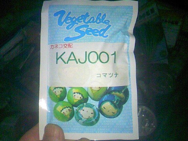 小松菜新品種先行入手