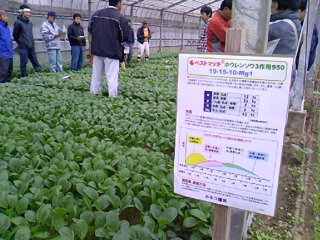 小松菜品種検討会2010秋編
