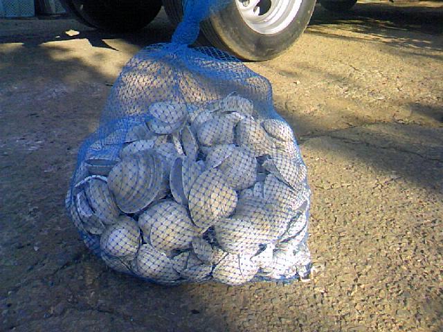 ホンビノス貝肥料化計画